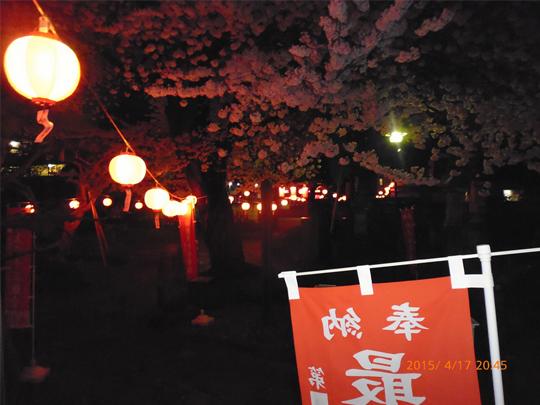 境内の桜の写真