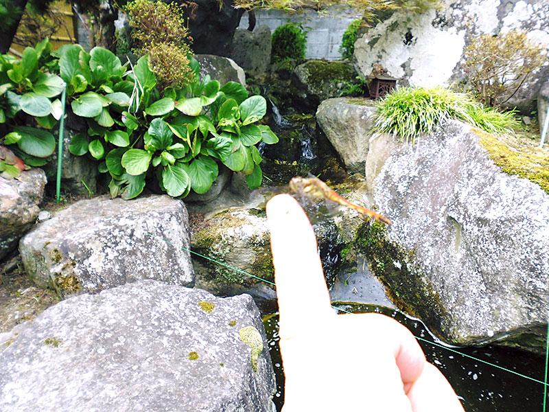 指にトンボが止まっている写真